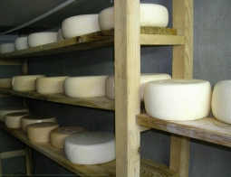 A guide to cheese Fabrication and maturing of each type of cheese