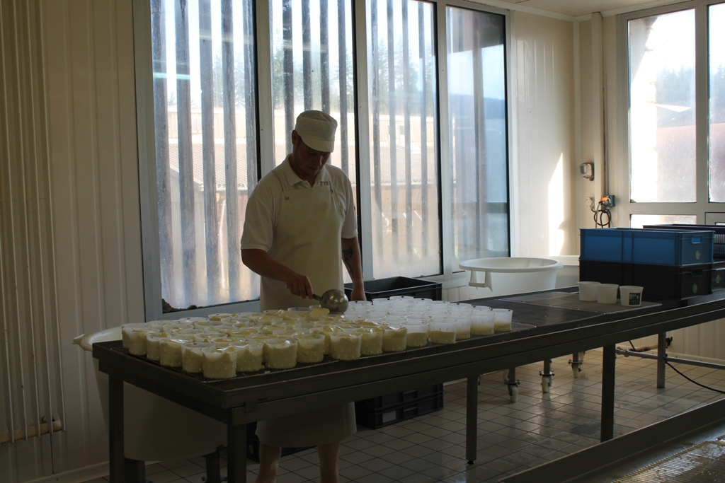 Cheese making